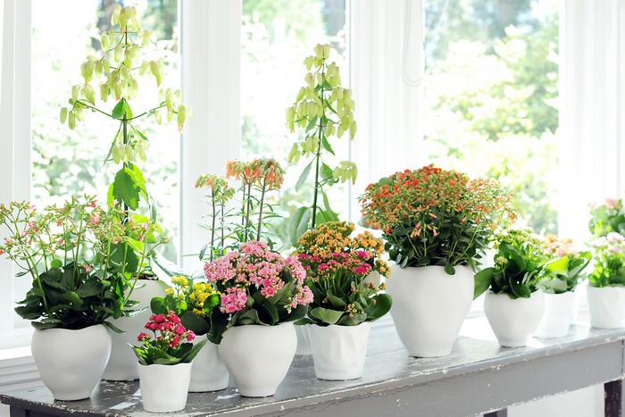 Что нужно сделать, чтобы комнатные цветы имели роскошный вид